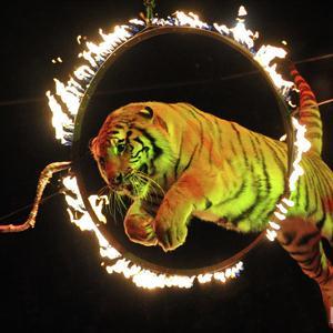Цирки Большого Нагаткино